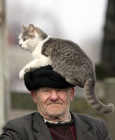 Cat hat, all about cats, funny animals, cute animals, funny kitties Amor Animal, Mundo Animal, Funny Cats, Funny Animals, Cute Animals, I Love Cats, Crazy Cats, Men With Cats, Photo Chat