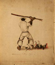 francisco fierro   Waterman Killing Dogs - Pancho Fierro