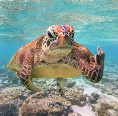 sea life - sea life photography - sea life underwater - sea life artwork - sea life watercolor sea l Baby Sea Turtles, Cute Turtles, Ninja Turtles, Save The Sea Turtles, Cute Little Animals, Cute Funny Animals, Turtle Love, Happy Turtle, Ocean Creatures