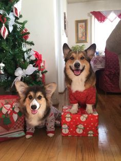 Jasper and Emmett want to wish everyone a merry Christmas! They just can't wait until they can open their gifts tomorrow
