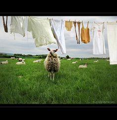 Laundry in Spring by h.koppdelaney, via Flickr