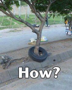 tire around tree