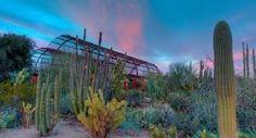 A Desert Botanical Garden Patrons Circle Membership