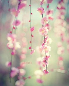 🌸枝垂れ梅🌸 #はなまっぷ #haru_pics #hanamap #team_jp #team_jp_flower #wp_flower #wp_まっぷ花まつり #igcs_flowers #ig_japan_flowers #tv_flowers #kanagawaphotoclub #lovers_nippon #lovers_flowers #花フレンド #カメラ女子#ふんわり写真部#igersjp #ファインダー越しの私の世界 #写真好きな人と繋がりたい  #写真撮ってる人と繋がりたい #sonyalpha #