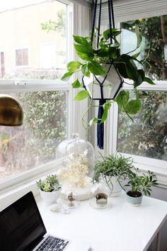 // hanging plants //