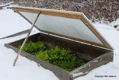 winter storm cold frame