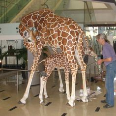 Lori Hugh Giraffes out of paper mache