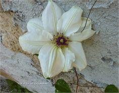Vše o co se zajímám: Květena a popis Plants, Plant, Planets