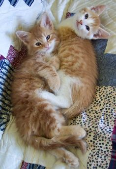 More Cuddles by Deborah