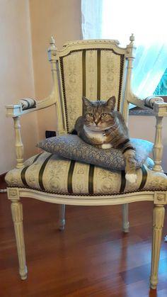 Gatta che si crede aristocratica