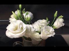 Как быстро вырастить эустому - YouTube Veronica, Make It Yourself, Rose, Flowers, Plants, Youtube, Pink, Florals, Roses