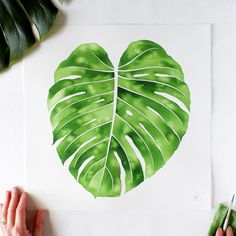 """First painting of my new """"To scale"""" series is now listed in my shop! """"Young Monstera No. 1"""" Watercolor on 140 lb. cotton paper 15 inch x 15 inch (38 cm x 38 cm)"""