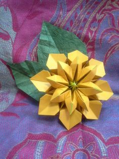 osanpo   flower   by   Carlos Bocanegra