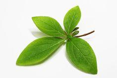 나뭇잎 - Google 검색