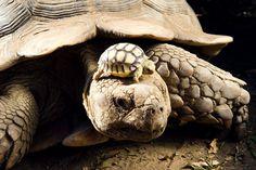 turtles on turtles.