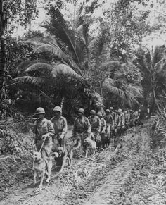 """""""U.S. Marine `Raiders' and their dogs, which are used for scouting and running messages, starting off for the jungle front lines on Bougainville."""" T.Sgt. J. Sarno, ca. November/December 1943"""