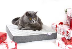 Maurice posing among presents to our Christmas session.