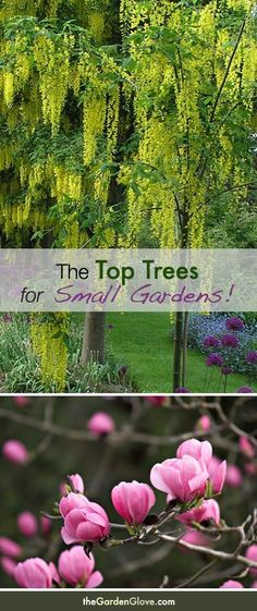 Beautiful! The Top Trees for Small Gardens. This would be for out in our front yard.: