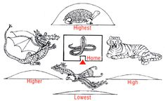 The Four Celestial Animals of Feng Shui
