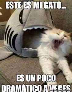 memes Brown Things brown color dream meaning Animal Jokes, Funny Animal Memes, Cute Funny Animals, Funny Animal Pictures, Funny Cats, Funny Jokes, Funny Spanish Memes, Spanish Humor, Memes Humor