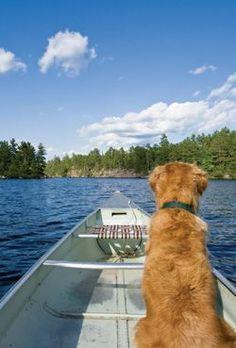 88 Best Dog Friendly Destinations Images On Pinterest In 2018 Dog
