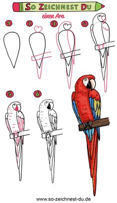 How to draw a parrot Simple A . - How to draw a parrot Simple instructions, - Cute Easy Drawings, Art Drawings Sketches Simple, Art Drawings For Kids, Pencil Art Drawings, Bird Drawings, Drawing For Kids, Animal Drawings, Drawing Birds Easy, Drawing Lessons