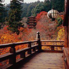 Autumn colours at Hase-Dera Temple in Nara, Japan (by Eiji Murakami).