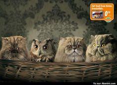 Akenini.com - Publicités Humoristiques Alimentation - Funny Creative Food Ads