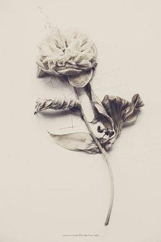 © Joanna Ulfsdotter Photography Illustrations, Illustration Art, Beautiful World, Flower Power, Planting Flowers, Photo Art, Art Photography, Artsy, Black And White