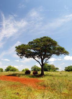 Hluhluwe National Park, KwaZulu-Natal, South Africa