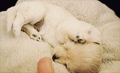 puppy waking up 2