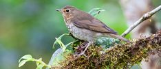 Environmental Issues, Birds, Wildlife, Animals, American, Animales, Animaux, Bird, Animal