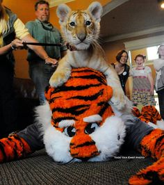 This is why Aubie is the best mascot ever. Go Tigers! War Eagle!