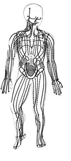 Meridianos principales de la parte anterior del cuerpo