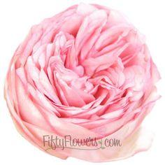 Peony Rose Bridal Piano | FiftyFlowers.com; 36 stems for $169.99
