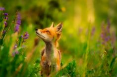 Wildlife and Plant Listings