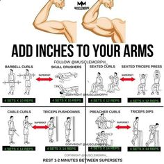 """8,216 Likes, 56 Comments - MuscleMorph® (@musclemorph_) on Instagram: """"ADD INCHES to your arms with this superset workout LIKE/SAVE IT if you found this useful. FOLLOW…""""https://www.instagram.com/p/BXuvVkagbs7/"""