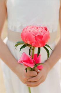 Niña de las flores / Flower girl
