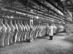 Rows of Meat in Storage at Bronx Warehouse Fotodruck von Herbert Gehr bei…