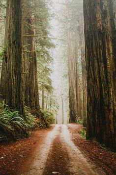 Driving between Giants. The beautiful Howland Hill Rd in Jedidiah Smith Redwoods State Park.