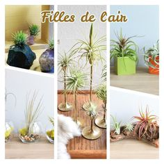 les 25 meilleures id es de la cat gorie accrocher les plantes d 39 air sur pinterest plantes. Black Bedroom Furniture Sets. Home Design Ideas