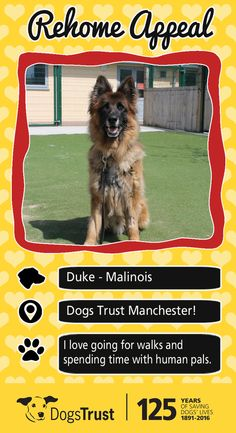 Duke is a handsome 10 year old chap who loves to play with his toys as well as with his best friends here at the centre. Duke loves going on walks and spending time with his favourite human pals here at the centre. The way to Duke's heart is through his food and giving him the time he needs to build trust.