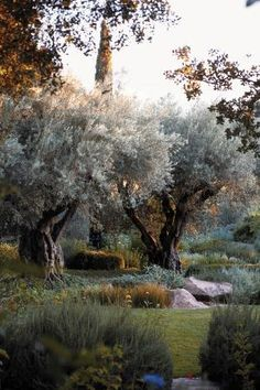 This Napa Valley winery plays host to an elegant garden party.Beautiful olive trees.