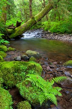 Photo of an Oregon stream. Exquisite, Oregon, landscape photographs by outdoor photographer Andy Cook available for purchase and stock use. Beautiful World, Beautiful Places, Beautiful Pictures, Nature Sauvage, Moss Garden, Belleza Natural, Nature Pictures, Amazing Nature, Beautiful Landscapes