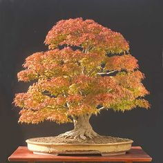 Walter Pall Bonsai Adventures: fall pictures - part 19