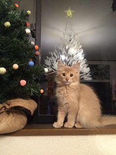 Window, Facebook, Cats, Animals, Gatos, Kitty Cats, Animaux, Animal, Cat