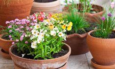 Piante perenni per il balcone: le 7 più facili da curare | I sempreverdi