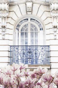 Magnolia Blossoms, Paris by Georgianna Lane