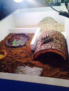 Horsefield Tortoise, Tortoise House, Tortoise Habitat, Tortoise Table, Sulcata Tortoise, Tortoise Enclosure Indoor, Turtle Tank Setup, Box Turtle Habitat, Turtle Terrarium