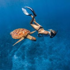 Early morning swim with one of the many turtles that call the Gili islands home…. Underwater Pictures, Scuba Diving Pictures, Tumbrl Girls, Gili Island, Underwater Photographer, Travel Aesthetic, Beach Photos, Marine Life, Under The Sea